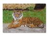 La tigre, olio su tela, cm. 40x60 2019